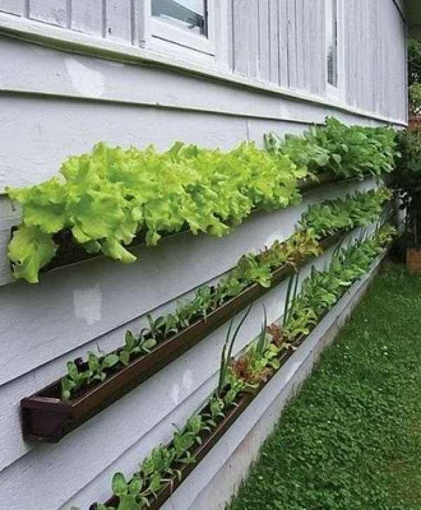 Mounted Gutter Garden DIY